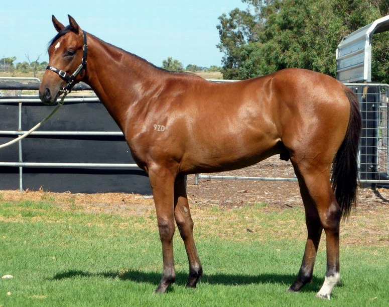 As Agent Lot 20 Blackfriars-Royal Drive..Colt