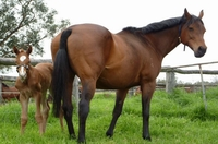 Key Business -Graceton filly