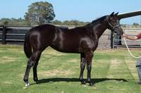 L2 Key Business-Ebonyvale filly