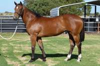 L41 Key Business-Golden Choice filly