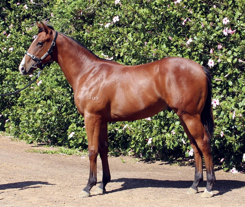 Lot 107 So Secret Real Hi colt