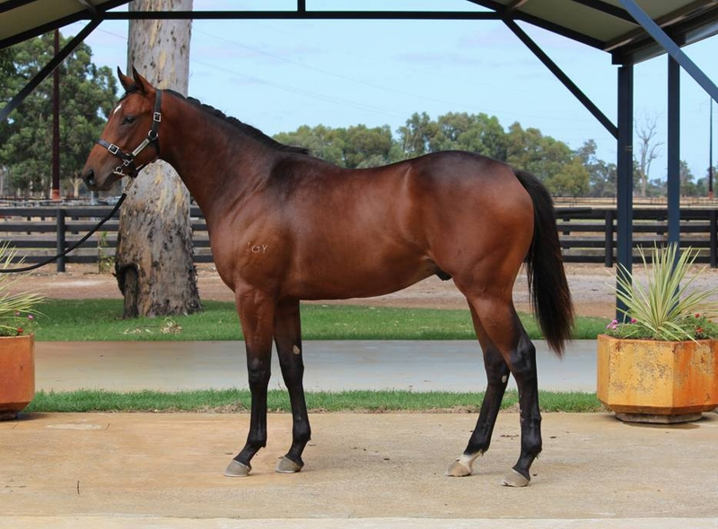 Lot 118 colt Galah x Tycoon Cut
