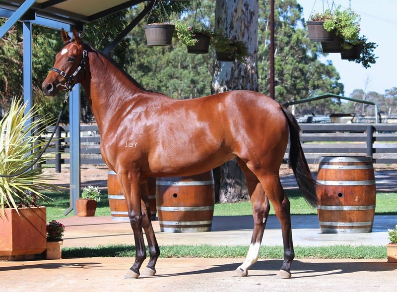Lot 124 Galah x Raring to Roar filly a half sister to Flying Roar 9w Lucky Roar 2w and $630k between them