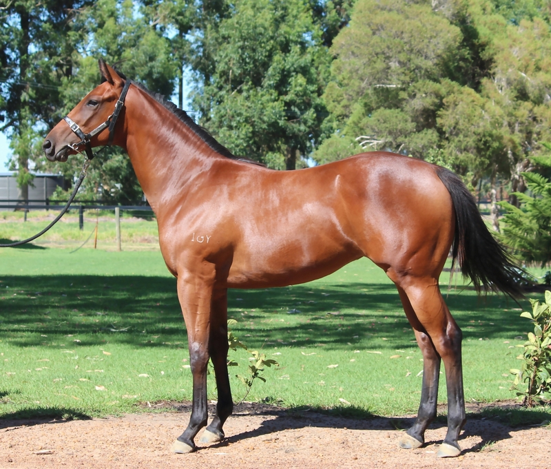 Lot 158 So Secret Strategic Choice filly