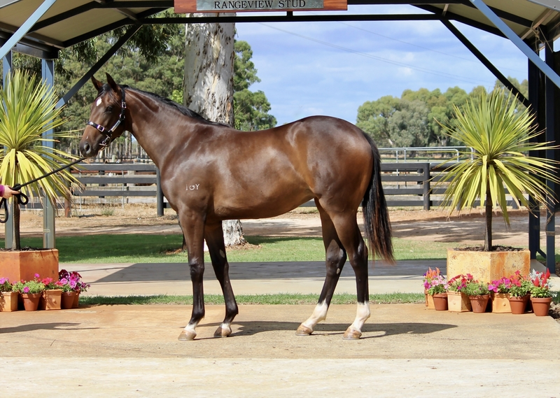 Lot 138 ZOUSTAR out of WISE TALK Filly
