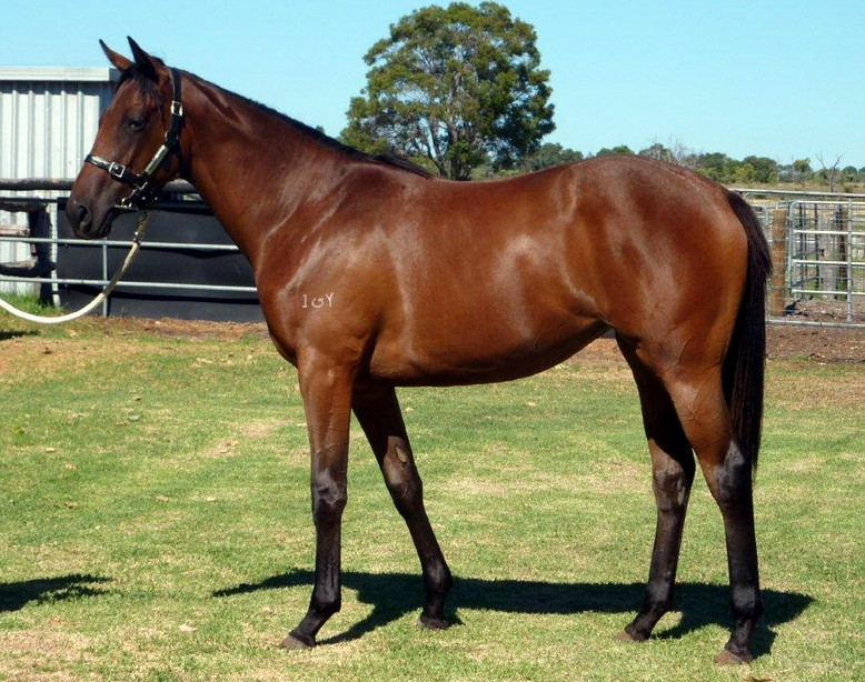 Lot 145 So Secret-Raring To Roar..filly
