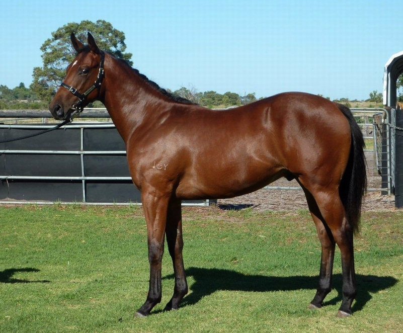 Lot 147 Colt So Secret Raring to Roar