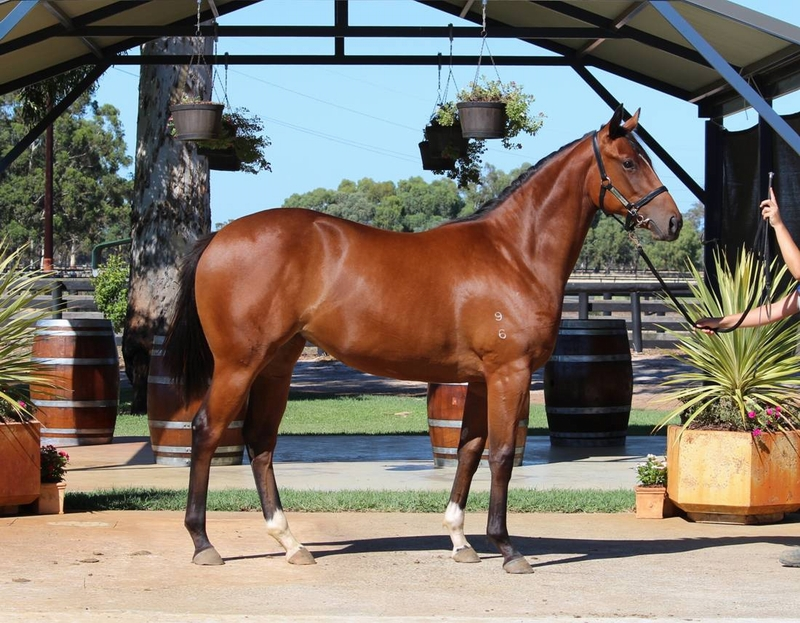 Lot 15 Galah x Wise Talk filly first foal from female line producing BARAKEY G1 13w, HI ON LOVE G3 7w MAGNIFISIO G1 14w
