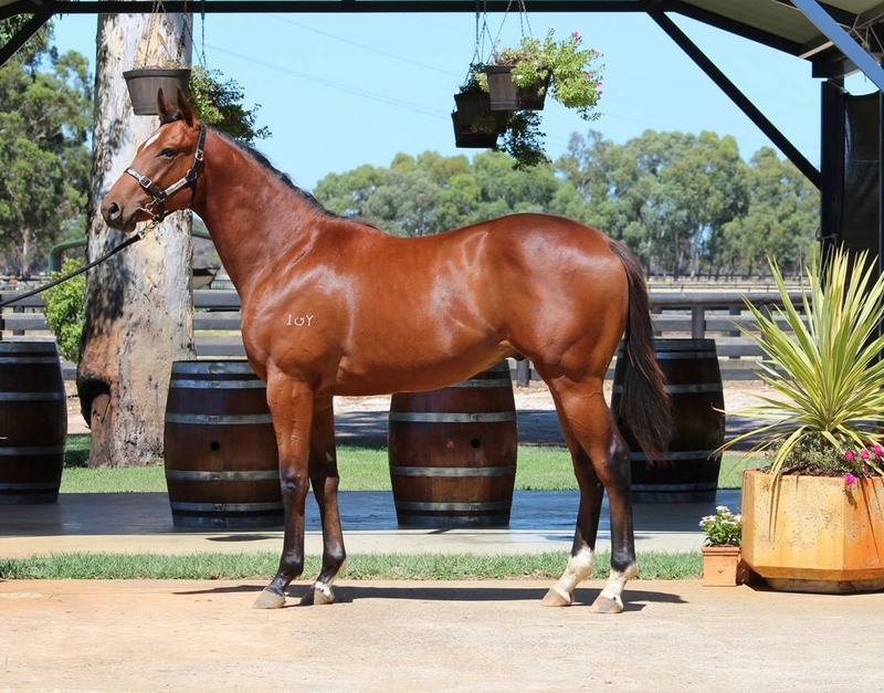 Lot 156 Galah x Tycoon Cut colt from a multiple city winning dam and half brother to two winners