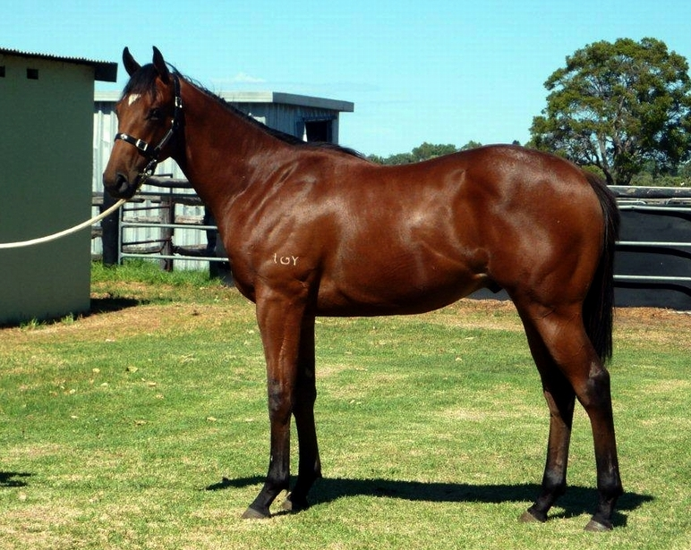 Lot 159 So Secret-Royal Minx..colt