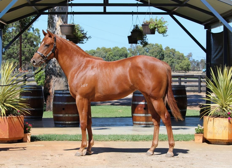 Lot 167 So Secret x Wrangler Jane filly - dam half sister to Listed & G3 winner KEYTON GRACE 10w SHOCK VALUE 9 w + others
