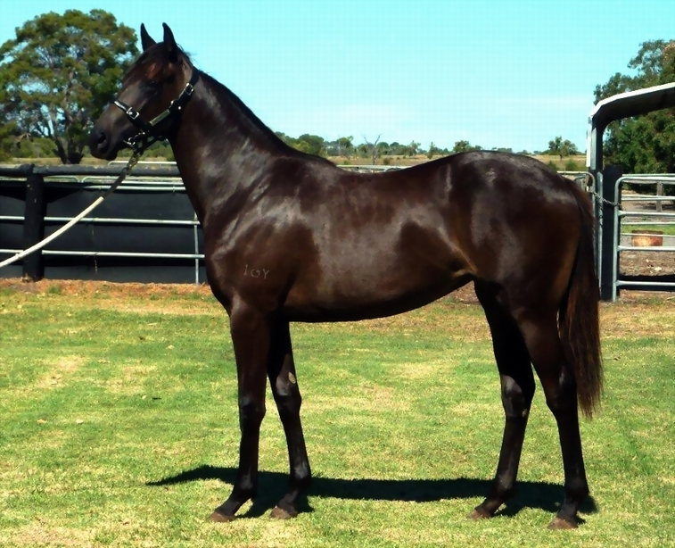 Lot 185 So Secret-Sky Business..filly