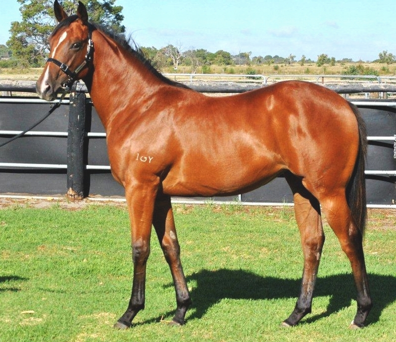 Lot 200 Filly So Secret Tycoon Cut