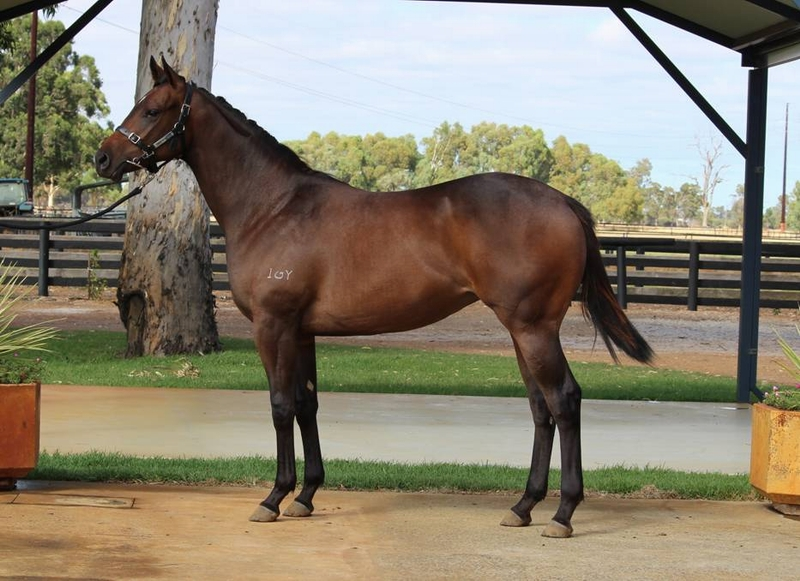 Lot 208 filly Galah x Conakey