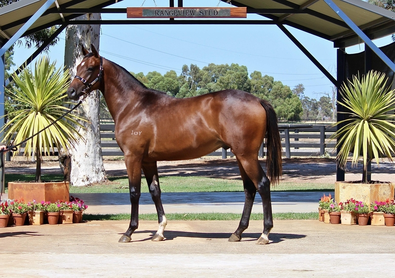LOT 211 GALAH out of HYDEN colt . Galileo mare from Listed winner WAVE ROCK who is also half sister to listed G3 winner DELTA GEE