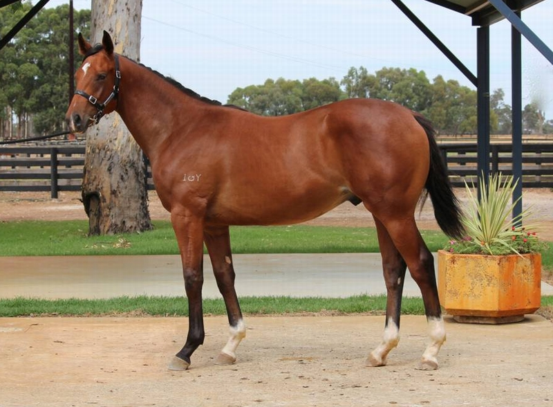 Lot 219 colt Galah x Dance to Heaven