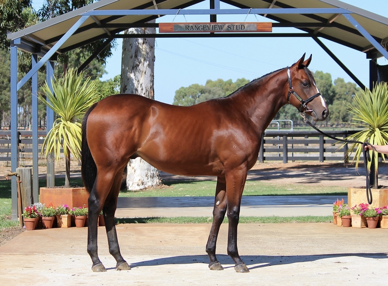 Lot 223 GALAH out of KINGS ADVANTAGE Colt