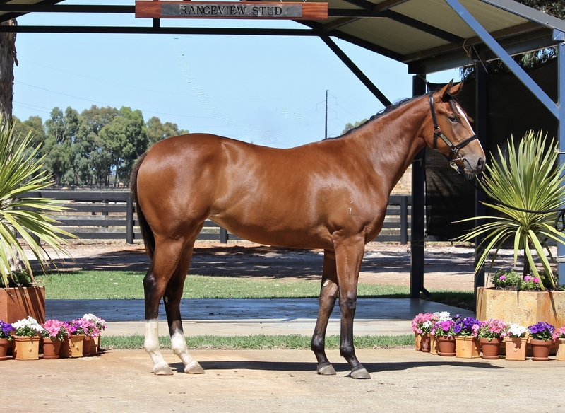 Lot 226 Galah x Hold the Money filly
