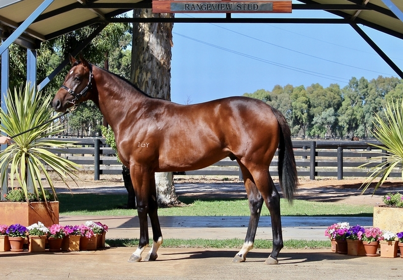 Lot 238 Galah x Kings Advantage colt