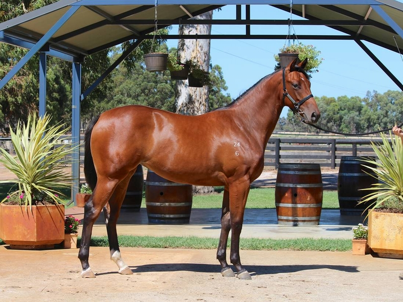 Lot 238 Galah x Liberty Isle filly a half sister to quality winner Watto's Fury