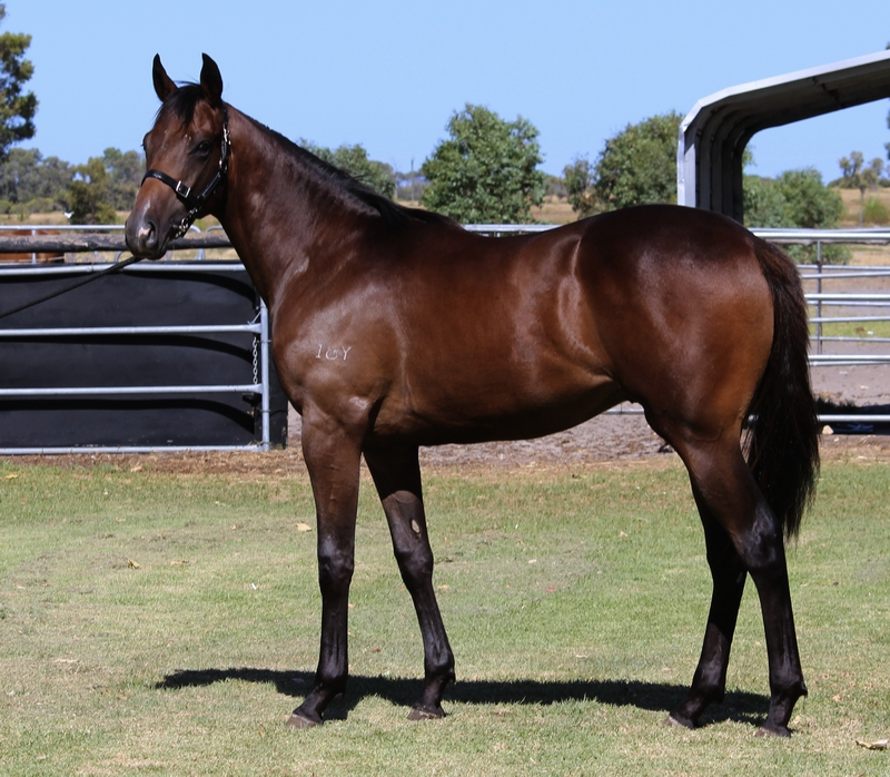 Lot 240 colt So Secret Colorado Times