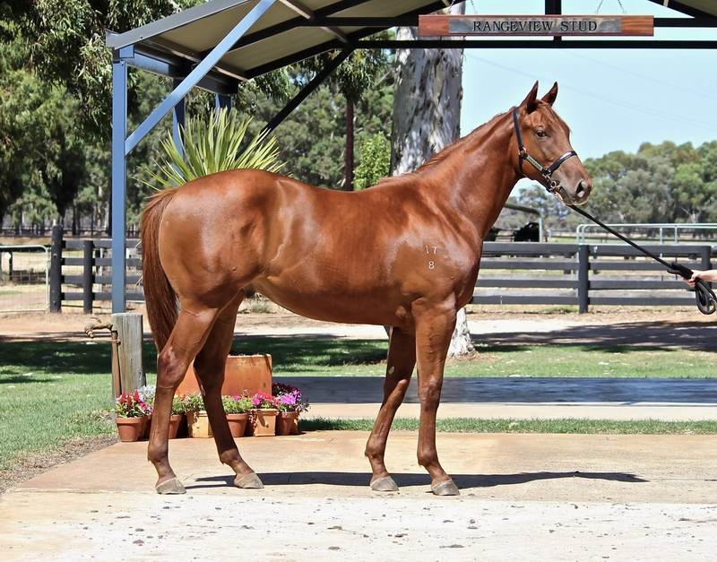 LOT 241 SO SECRET out of MOVIES BY BURSWOOD colt.
