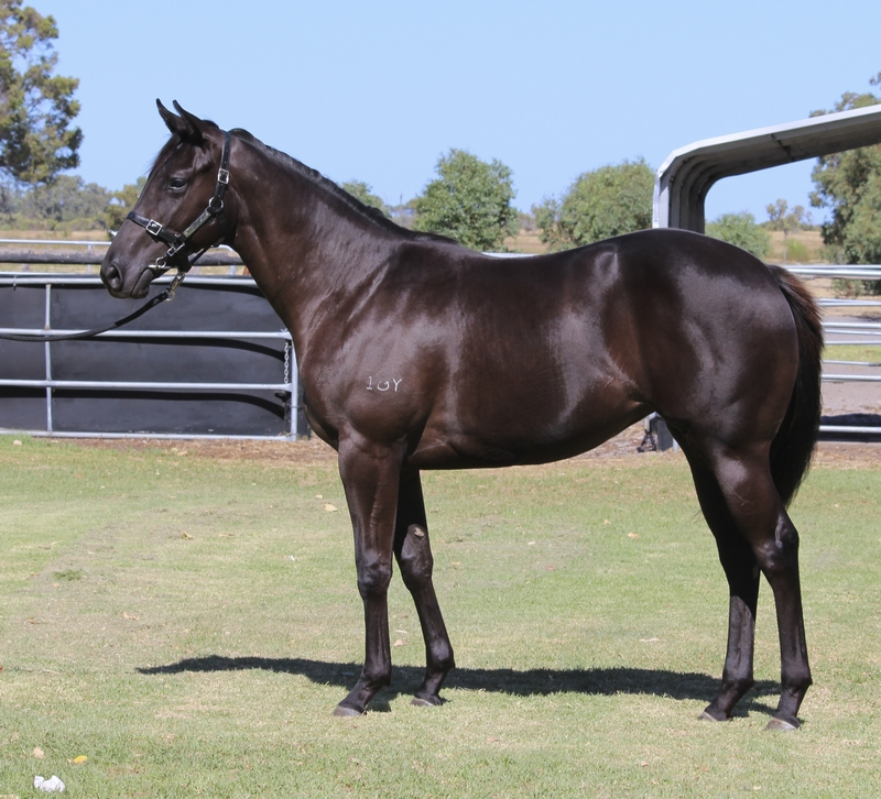 Lot 242 filly So Secret Conamore