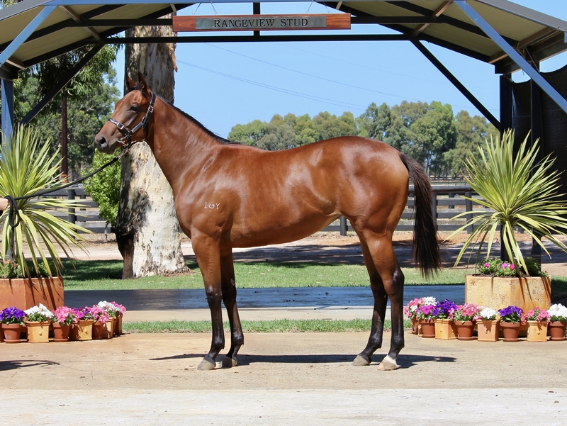 Lot 244 Galah x Maybe Us filly
