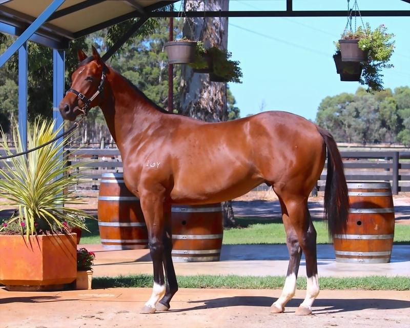 Lot 255 Galah x Outward Display colt from quality Thunder Gulch mare won 5 & produced 7 winners inclu Gp1