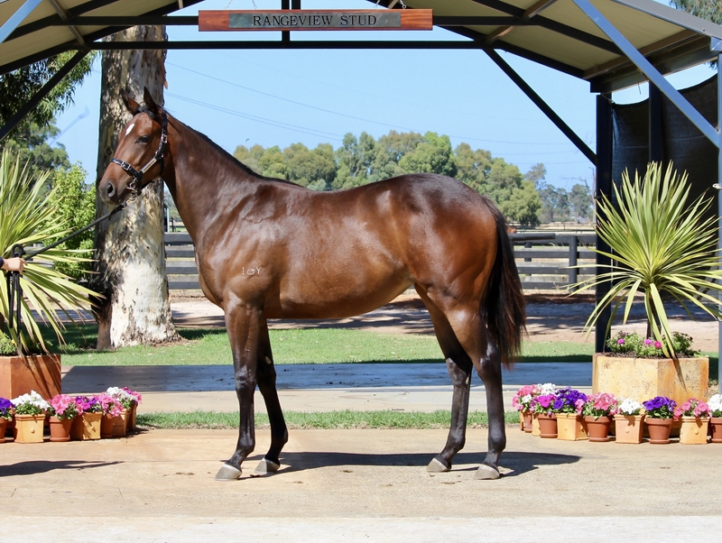Lot 258 Galah x Party Starter filly