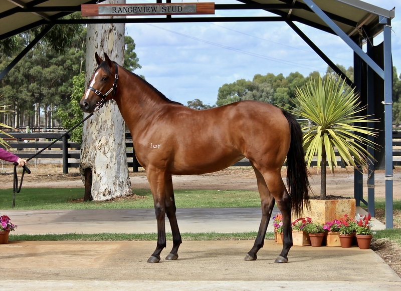 Lot 258  SO SECRET out of RARING TO ROAR Filly