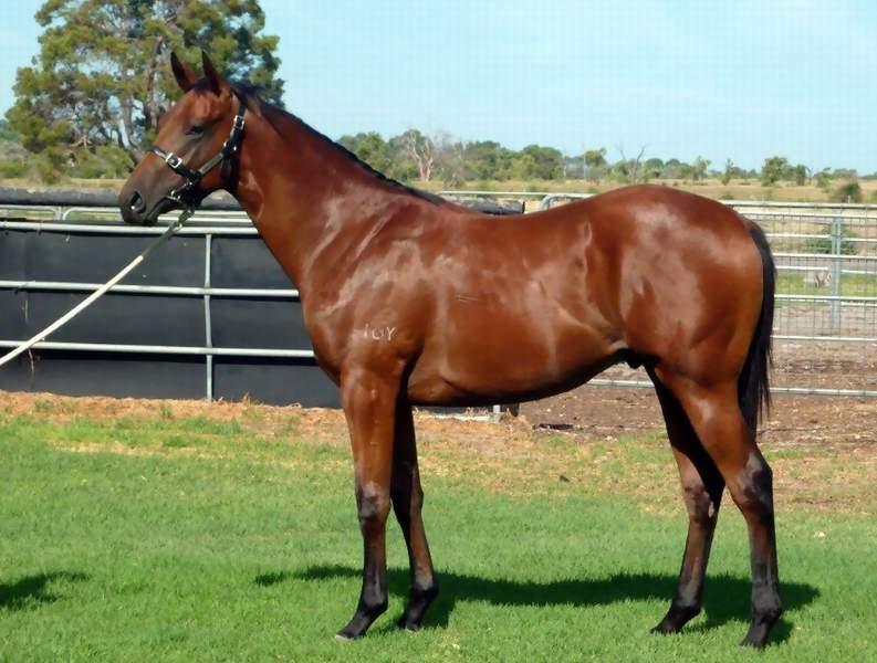 Lot 264 Flying Pegasus-All The Way May..Colt
