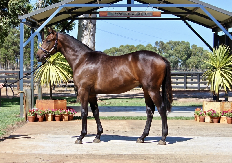 LOT 268 GALAH out of SECRET CRUSH colt. Dam placed half sister to KEYTON GRACE 10 wins $$383,450, SHOCK VALUE 9 wins $480,425.