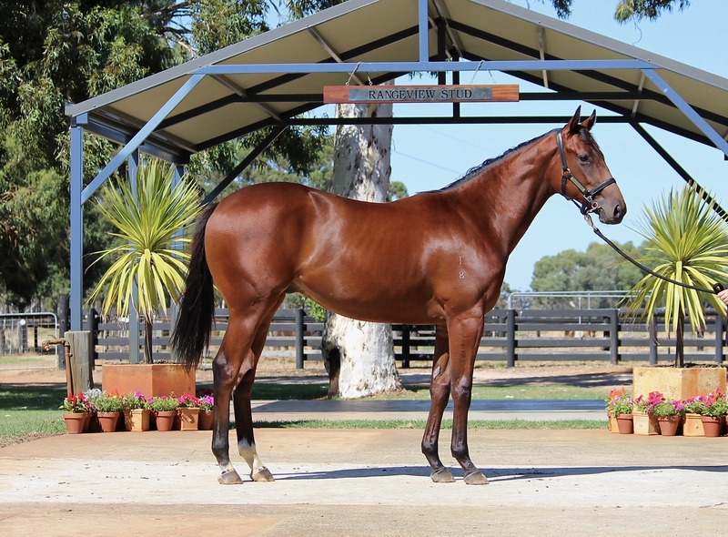LOT 269 GALAH out of SECRET DIVA colt