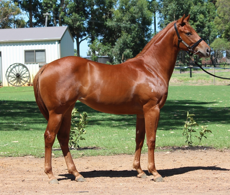 Lot 270 Magnus  Conakey filly