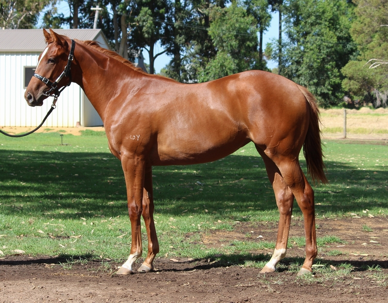 Lot 271 Filly Henny Hughes Outward Display