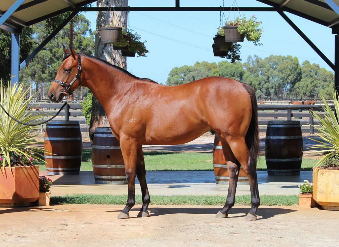 Lot 272 So Secret x Royal Culture colt from winning Royal Academy mare, family multiple G1 winner CARGO CULT