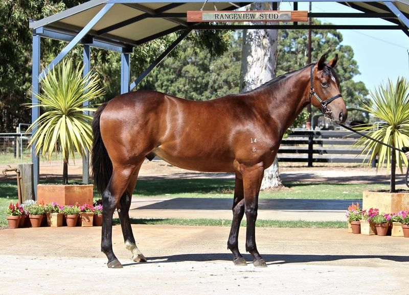LOT 278 GALAH out of SO FANCY colt