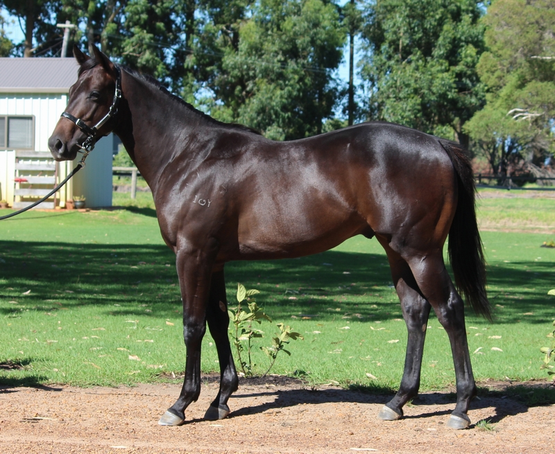 Lot 28 So Secret Liberty Isle colt