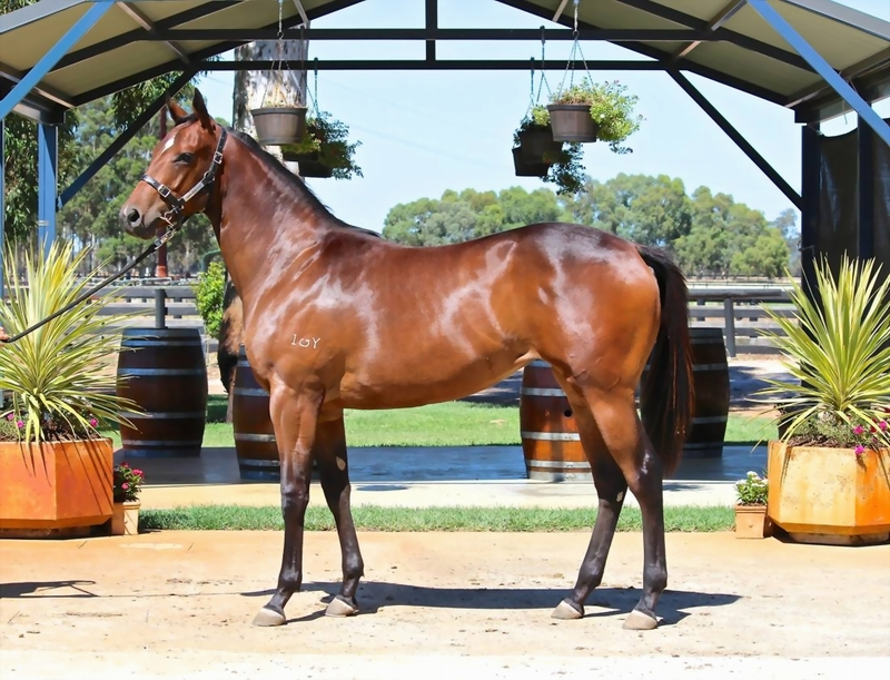 Lot 281 Galah x Scottish Storm filly, a half sister to COGNAC and dam Magic Millions 2 yr old Classic Winner