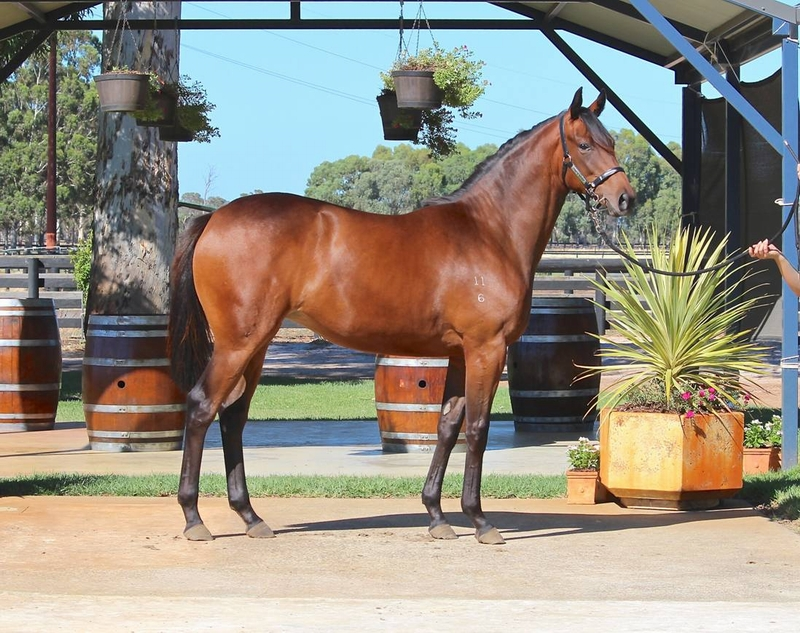 Lot 283 Galah x Secret Crush filly - dam a half sister to Listed winners KEYTON GRACE 10w  SHOCK VALUE 9w and other winners