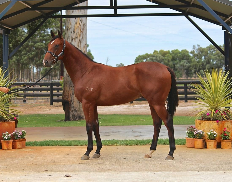 Lot 284 Galah x Secret Diva colt from a winning mare