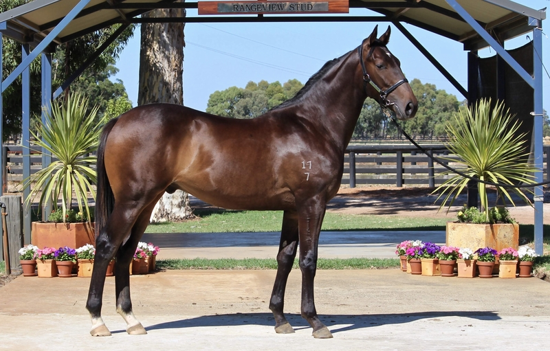 Lot 290 All American Snuka colt
