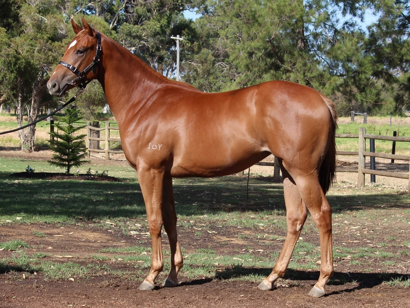 Lot 296 Filly Henny Hughes Scottish Storm