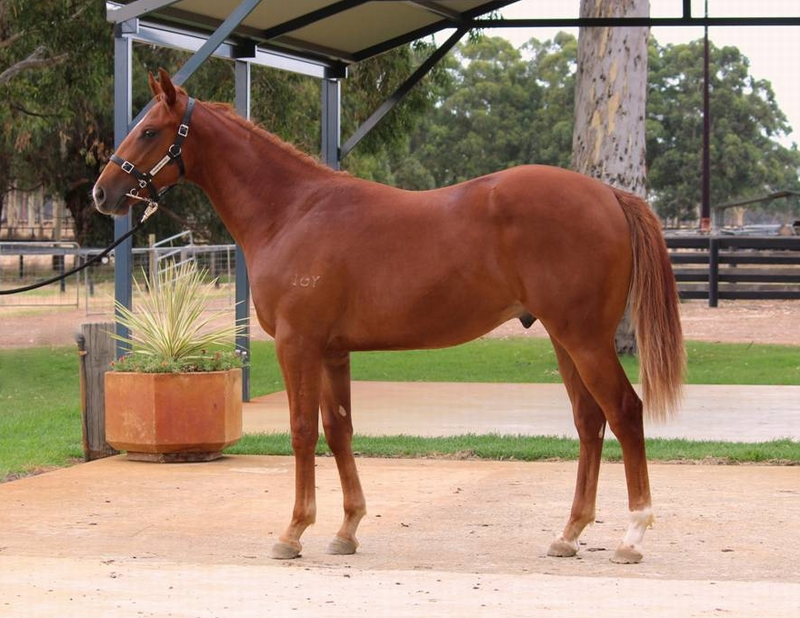 Lot 30 colt So Secret x Raring to Roar