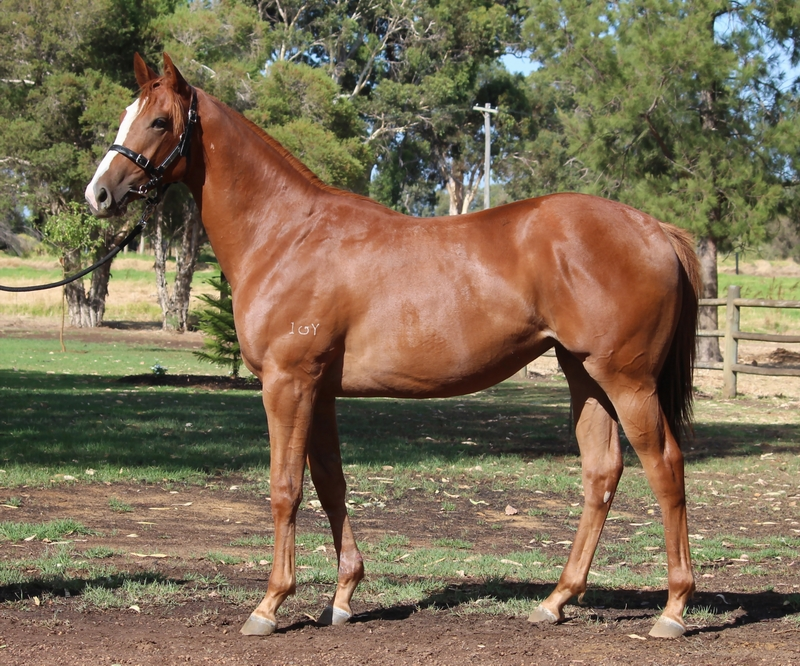 Lot 310 Filly Henny Hughes Starsinmyveins