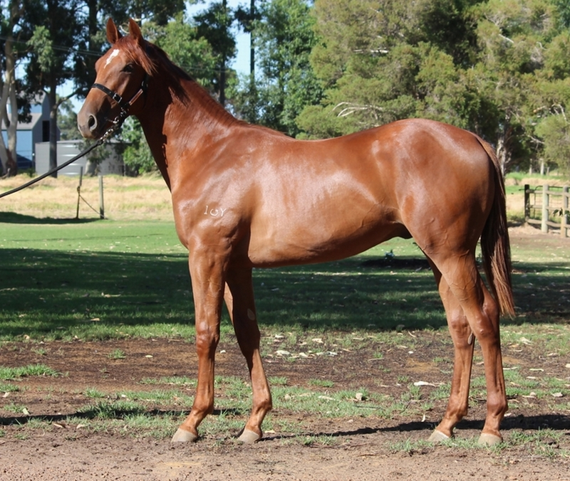Lot 315 Colt Henny Hughes Strategic Choice