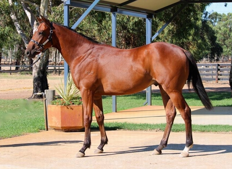 Lot 319 colt High Chaparral x Lip Pencil - dam by Zeditave with two to race two winners