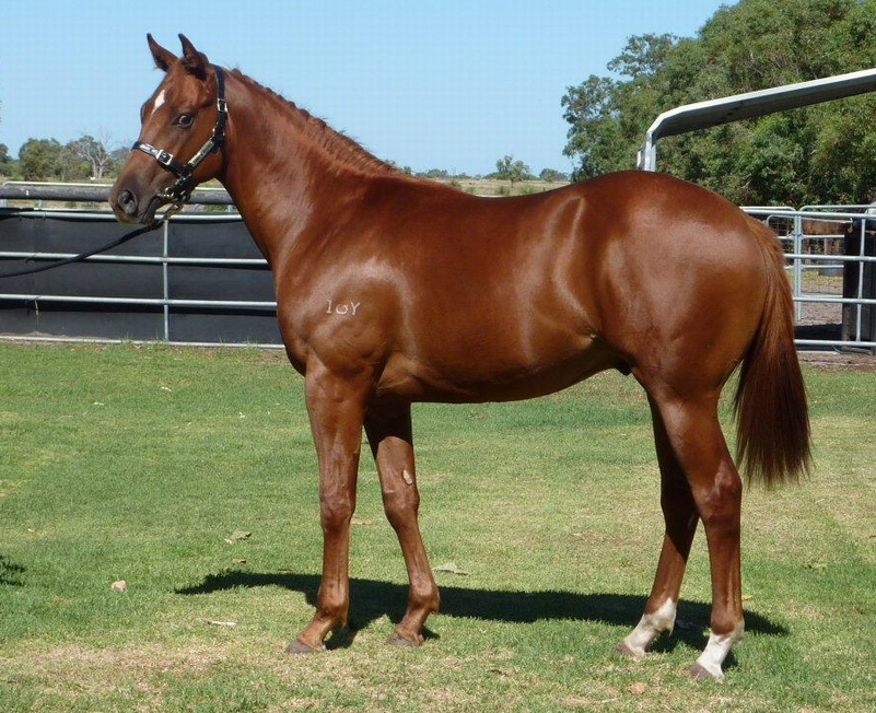 Lot 320 Colt So Secret La Vie en Rose