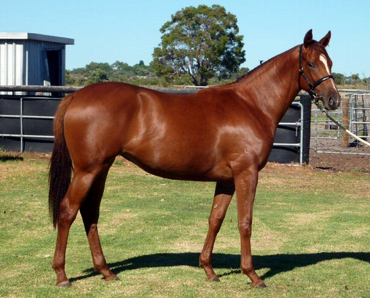 Lot 330 So Secret-Conamore..filly